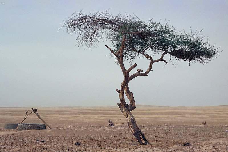 Самое одинокое дерево на Земле.
