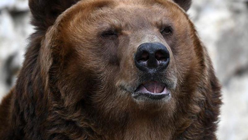 медведь с автоматом калашникова