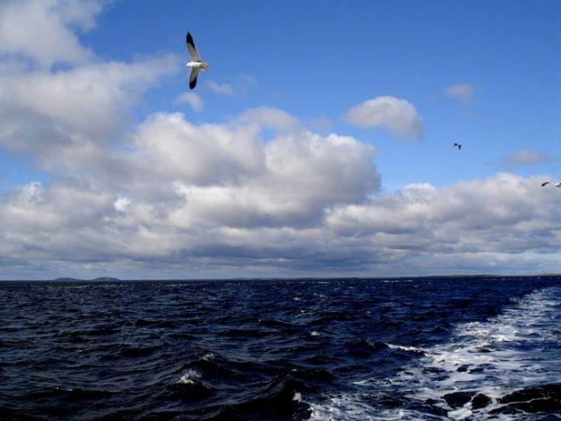 Интересные факты о Белом море.